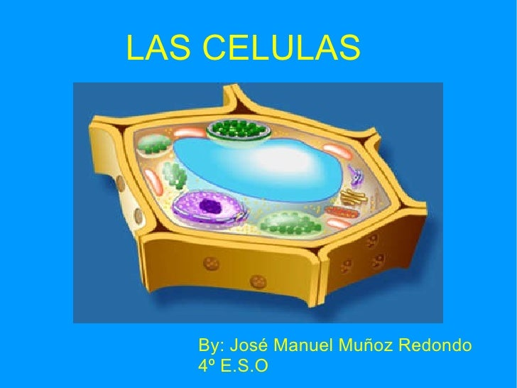 LAS CELULAS  By: José Manuel Muñoz Redondo 4º E.S.O