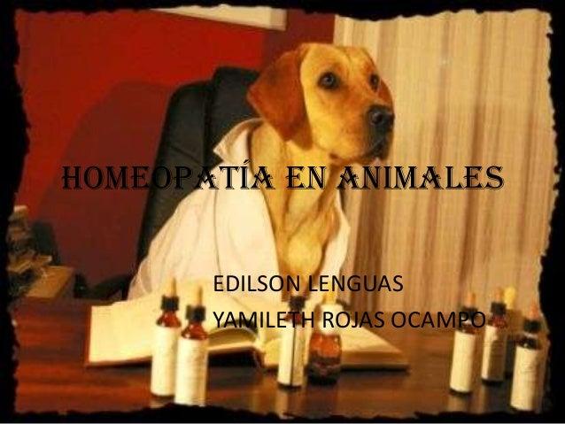 HOMEOPATÍA EN ANIMALES EDILSON LENGUAS YAMILETH ROJAS OCAMPO