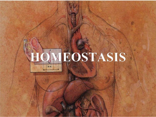 Homeostasis   Definición: Mantenimiento del organismo dentro de límites que le permiten desempeñar una función de manera ...