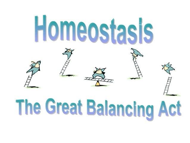 Biology Homeostasis