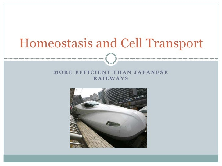 Homeostasis and Cell Transport       MORE EFFICIENT THAN JAPANESE                RAILWAYS