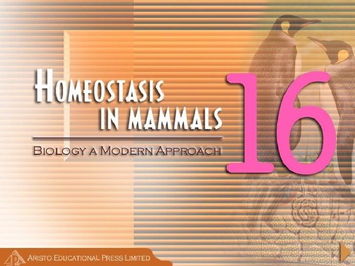 Homeostasis In Mammals  Ar