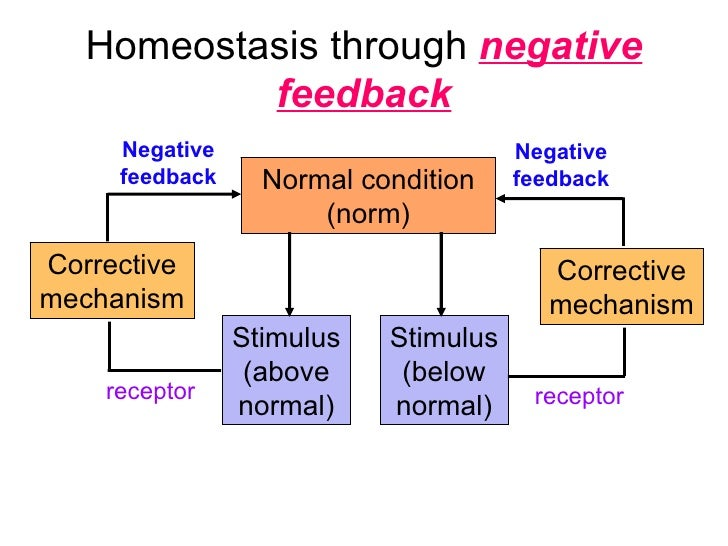 homeostasis and how the body responds Homeostasis and how the body responds to exercise this report will interpret the results of the practical activities that was done in order to monitor the changes in heart rate, temperature and blood pressure before and after exercise.