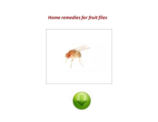 fruit custard fruit fly remedy
