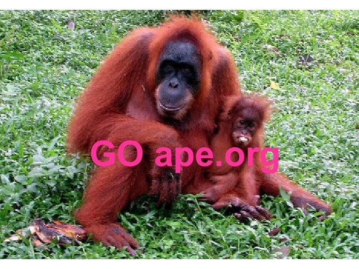 GO ape.org