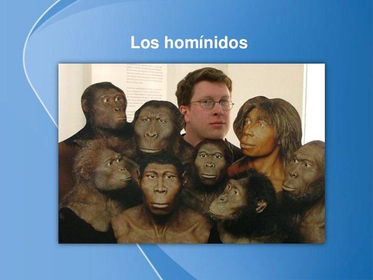 Hominidea