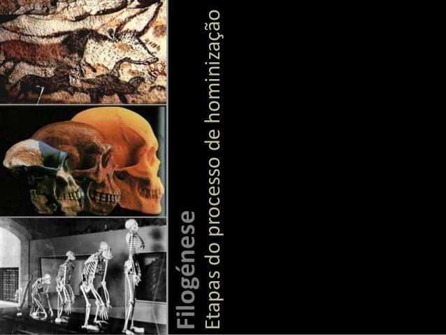Etapas do processo de hominização  Filogénese