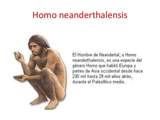 Homo neanderthalensis Neanderthal 1