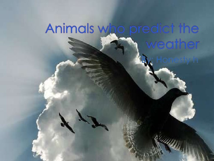  It has been said there are some animals  who sense weather activity before it  happens. According to some researchers, ...