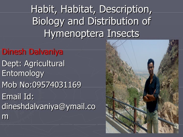 Habit, Habitat, Description,       Biology and Distribution of          Hymenoptera InsectsDinesh DalvaniyaDept: Agricultu...