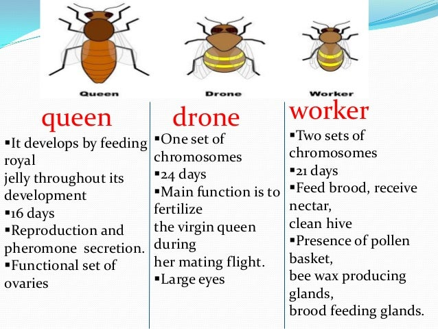 do ovaries produce testosterone