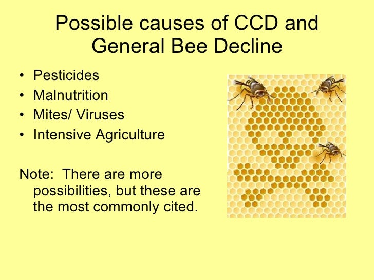 the decline of honey bees Brit amos | the proof is obvious that one of the major reasons of the bees' decline is by the ingestion of gmo proteins.