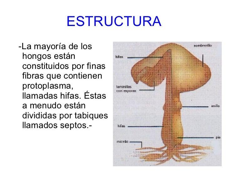 Como curar en la garganta el estreptococo y el hongo