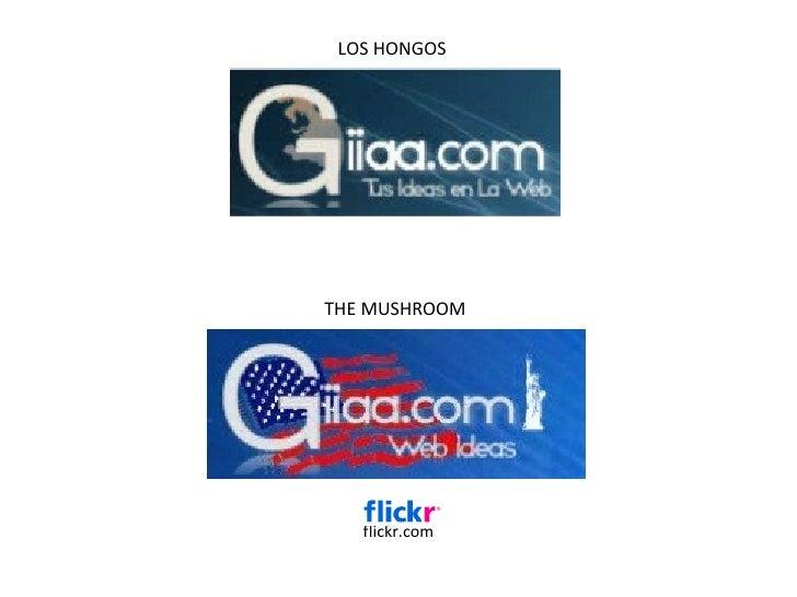 flickr.com LOS HONGOS THE MUSHROOM