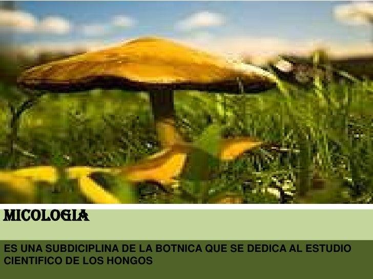 MICOLOGIA<br />ES UNA SUBDICIPLINA DE LA BOTNICA QUE SE DEDICA AL ESTUDIO CIENTIFICO DE LOS HONGOS<br />