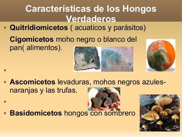 El hongo en los pies las causas psicológicas