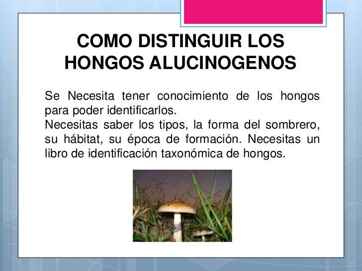 Droga hongos alucin genos - Tipos de hongos en la pared ...