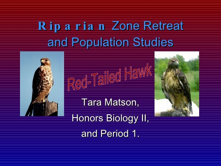 Riparian  Zone Retreat and Population Studies Tara Matson, Honors Biology II, and Period 1. Red-Tailed Hawk