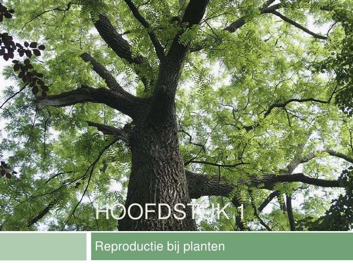 HOOFDSTUK 1Reproductie bij planten