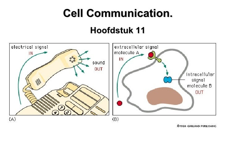 Cell communication. Hoofdstuk 11. Cell Communication. Hoofdstuk 11