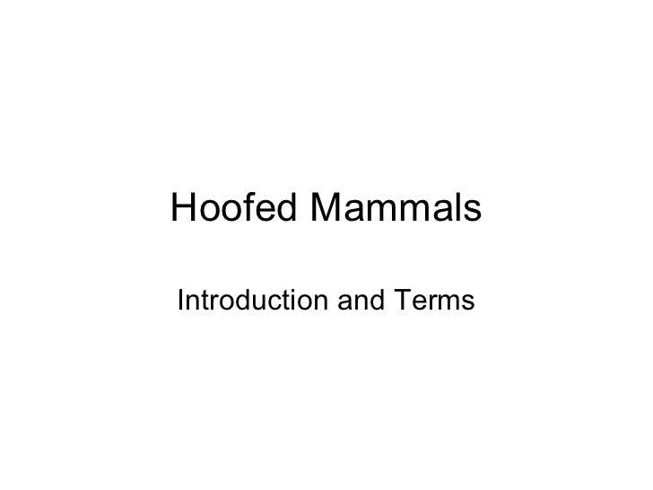 Hoofed mammals 1