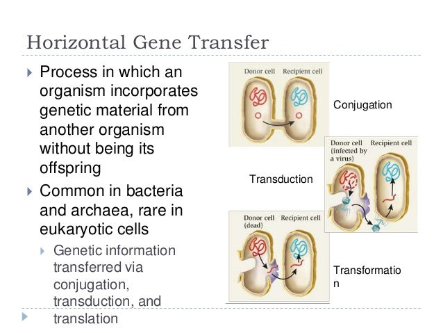 horizontal gene transfer responsible for carotenoid Tree of life showing vertical and horizontal gene transfers horizontal gene transfer ( hgt ) or lateral gene transfer ( lgt ) is the movement of genetic material between unicellular and/or multicellular organisms other than by the (vertical) transmission of dna from parent to offspring.