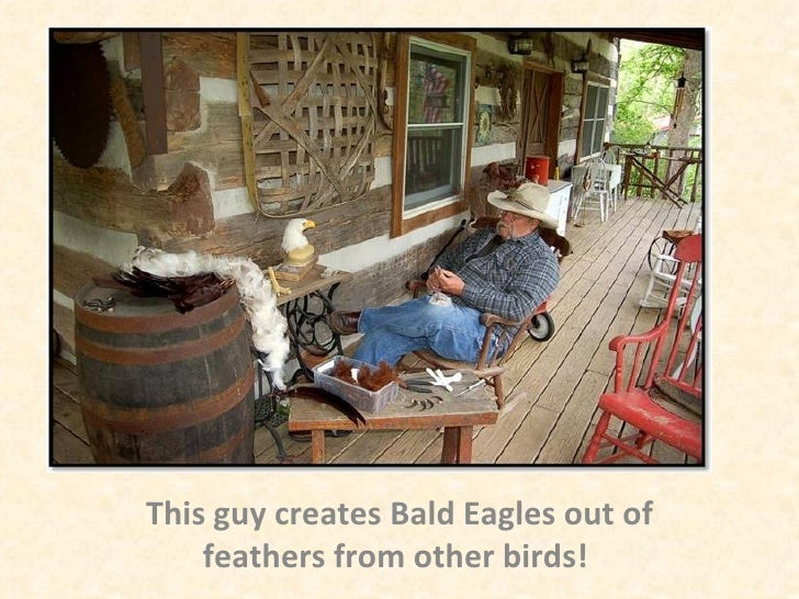 This guy creates Bald Eagles out of feathers from other birds!