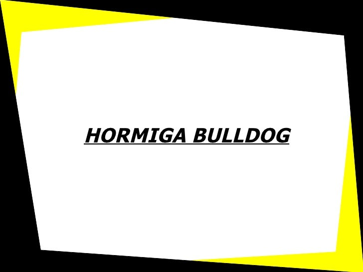 HORMIGA BULLDOG