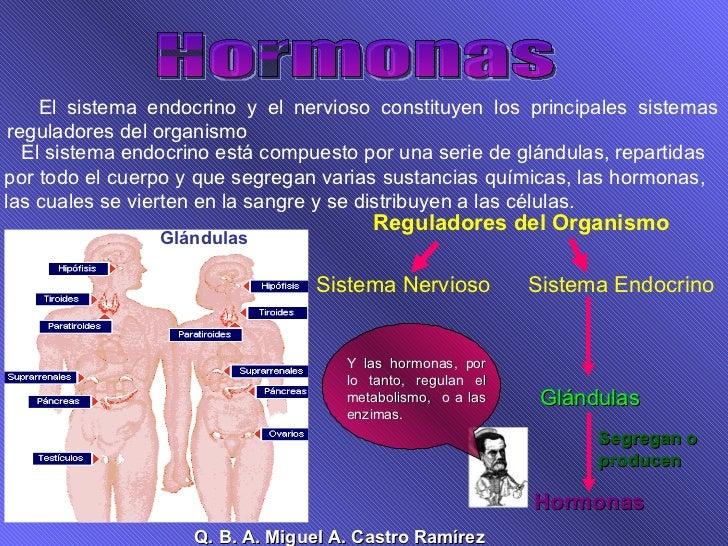 Hormonas El sistema endocrino y el nervioso constituyen los principales sistemas reguladores del organismo  El sistema end...