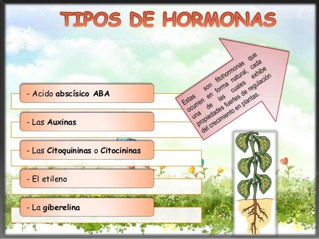 Hormonas vegetales por evelin rivera for Hormonas en las plantas