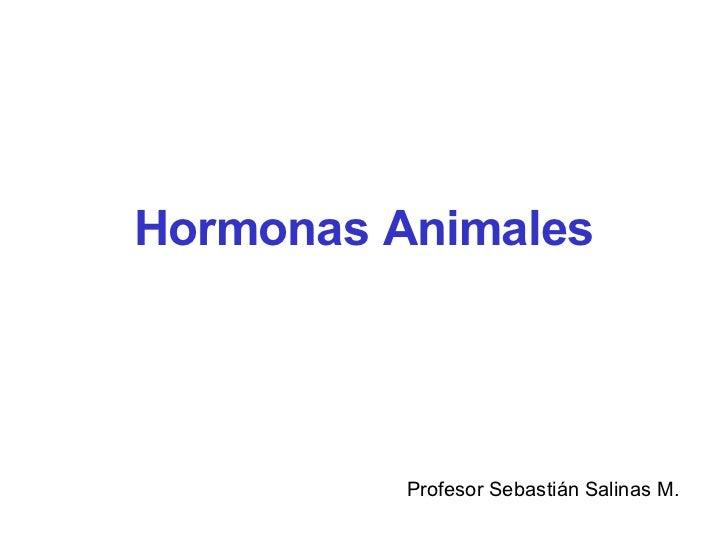 Hormonas Animales Profesor Sebastián Salinas M.