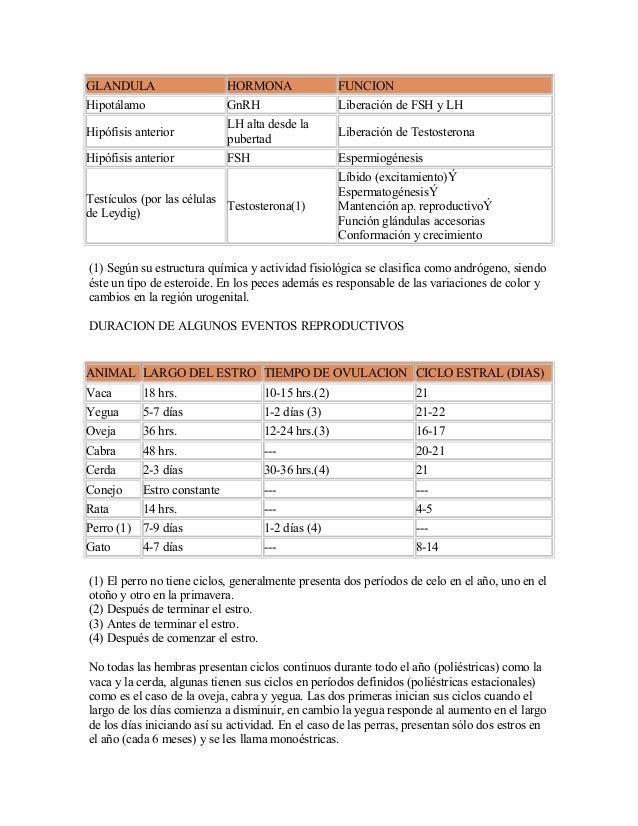 GLANDULA HORMONA FUNCIONHipotálamo GnRH Liberación de FSH y LHHipófisis anteriorLH alta desde lapubertadLiberación de Test...