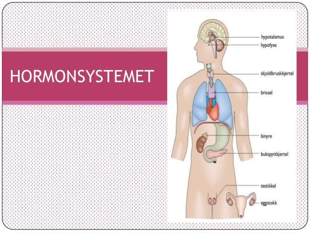 trude hembre hormoner i kroppen