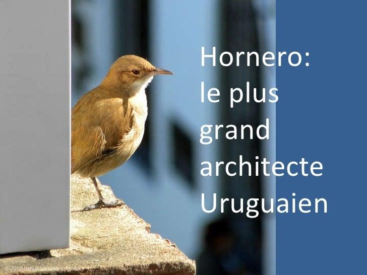 Hornero: le plus grand architecte Uruguaien