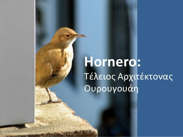 Bird constructor