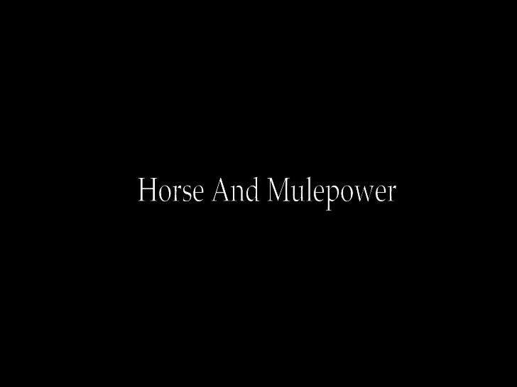 Horse and Mulepower