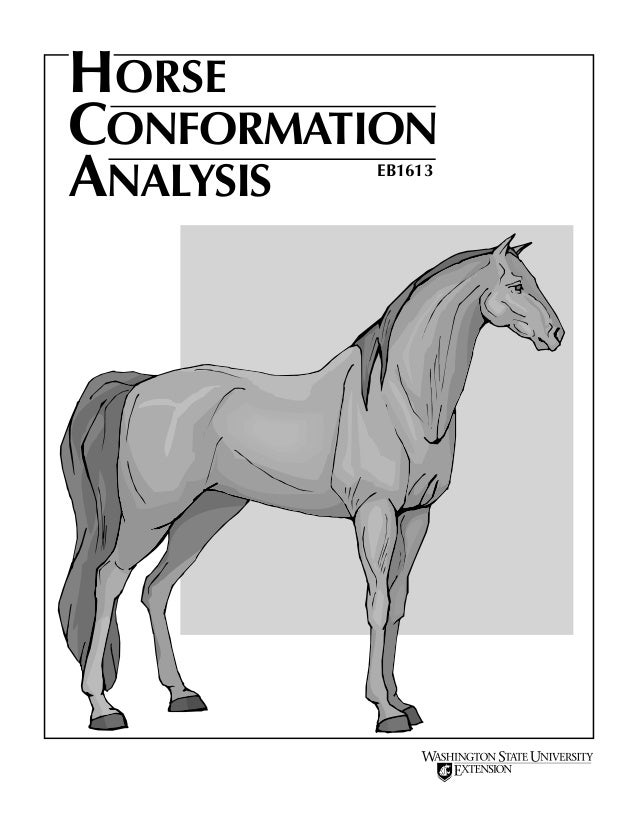HORSE CONFORMATION ANALYSIS EB1613