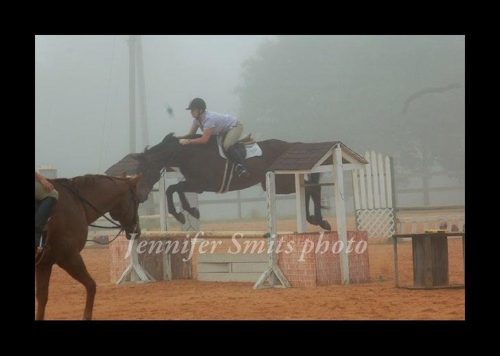Horse portfolio photos