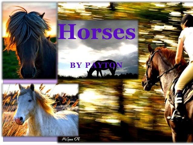 BY PAYTON Horses