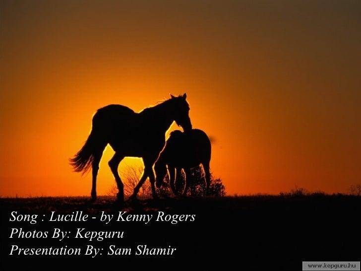 Horses Lucille