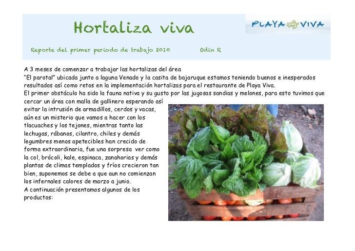 Hortaliza viva  Reporte del primer periodo de trabajo 2010                    Odin RA 3 meses de comenzar a trabajar las h...