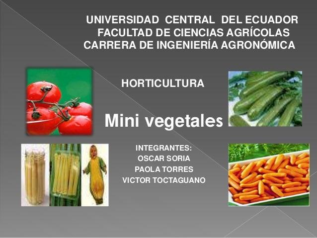 UNIVERSIDAD CENTRAL DEL ECUADOR  FACULTAD DE CIENCIAS AGRÍCOLAS  CARRERA DE INGENIERÍA AGRONÓMICA  HORTICULTURA  Mini vege...