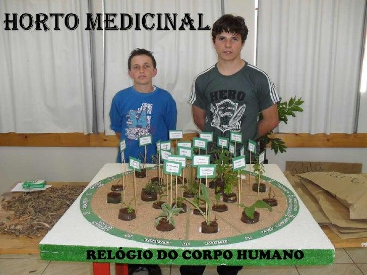 HORTO MEDICINAL<br />RELÓGIO DO CORPO HUMANO<br />
