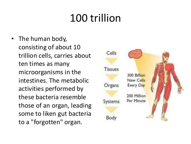 number of cells in the human body 14453   usbdata, Human body