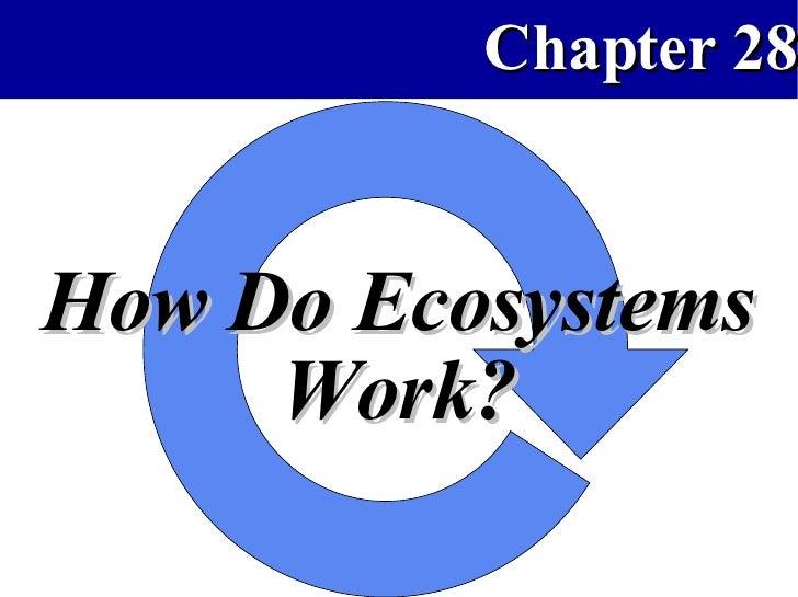 How Ecosystems Work APBio