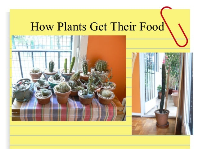 Plants don't go to Coto