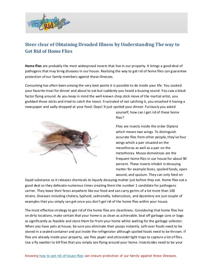 How to Get Rid of House Flies How to Get Rid of House Flies
