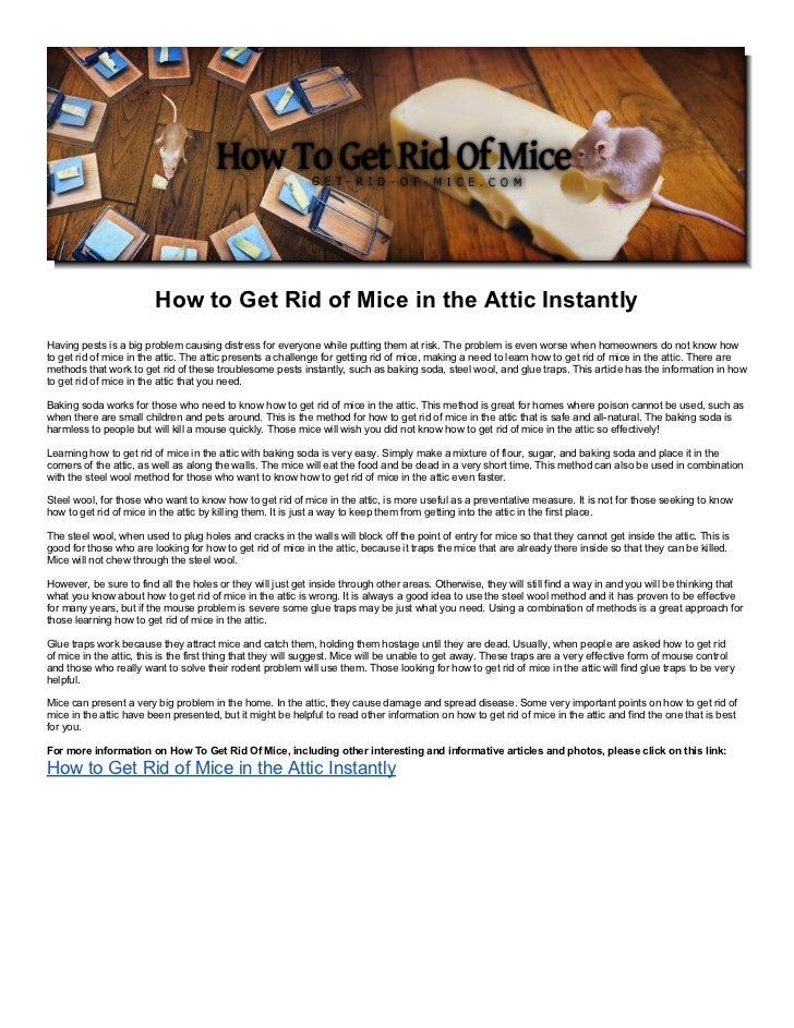 How to Get Rid of Mice in the Attic InstantlyHaving pests is a big problem causing distress for everyone while putting the...