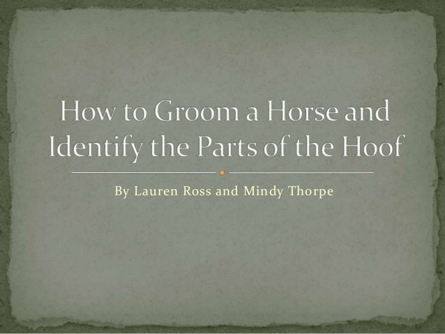 How To  Groom A  Horse And  Identify The
