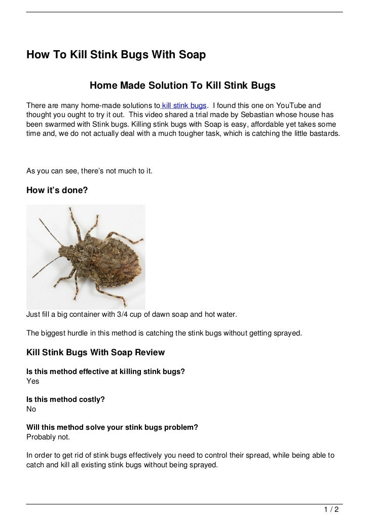 How to Kill a Stink Bug